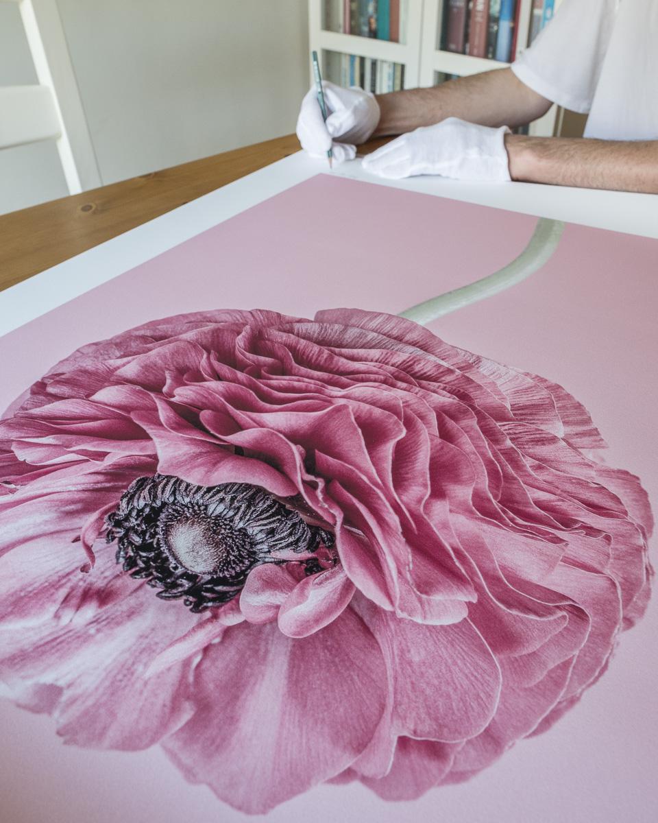 Signing 'Chroma' floral series large print, D8E5583, L1200px, 400KB, © Paul J Coghlin 2018.jpg