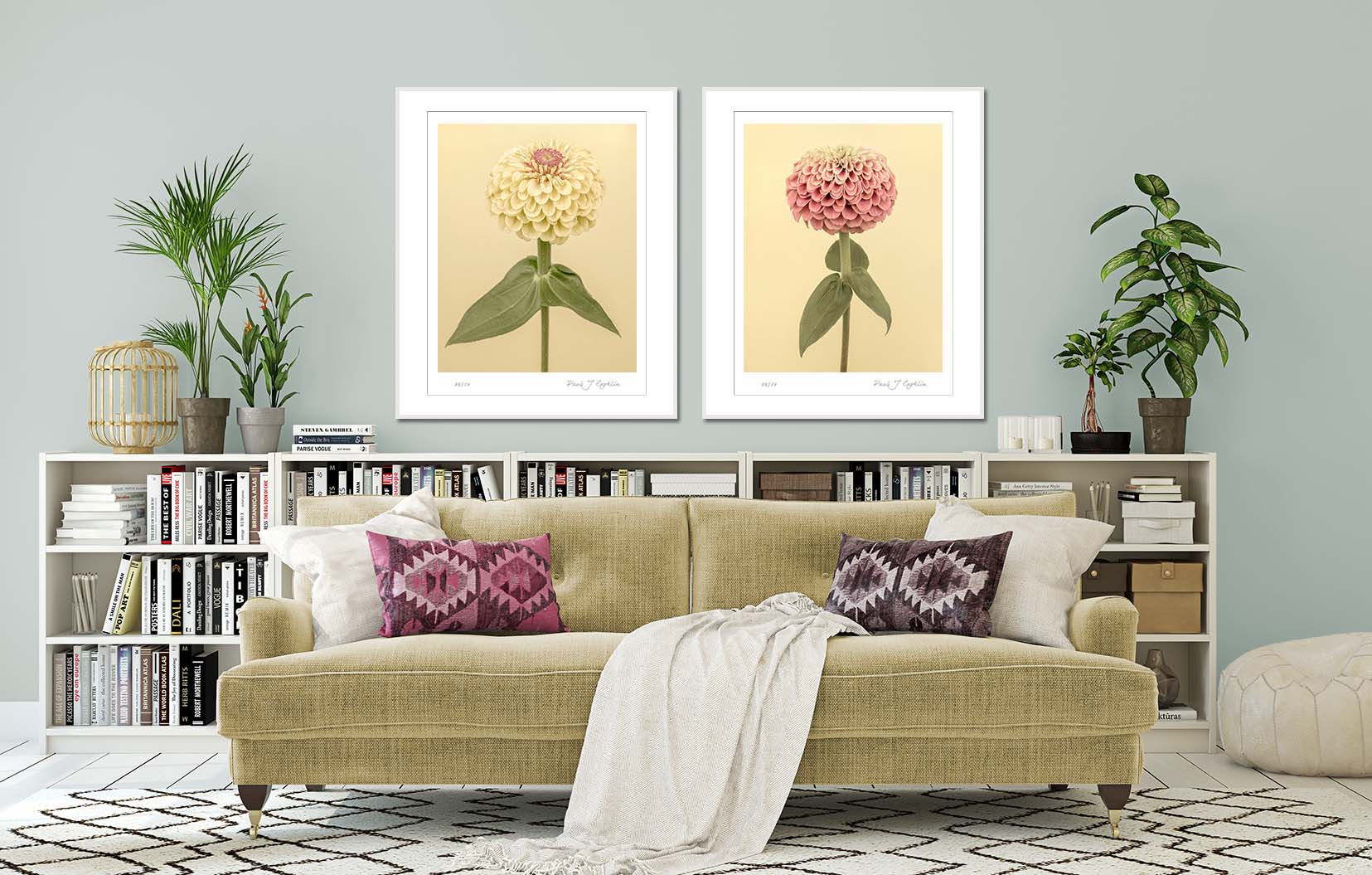 Two Zinnia flowers on a yellow background. Limited edition fine art prints by fine art photographer Paul Coghlin.