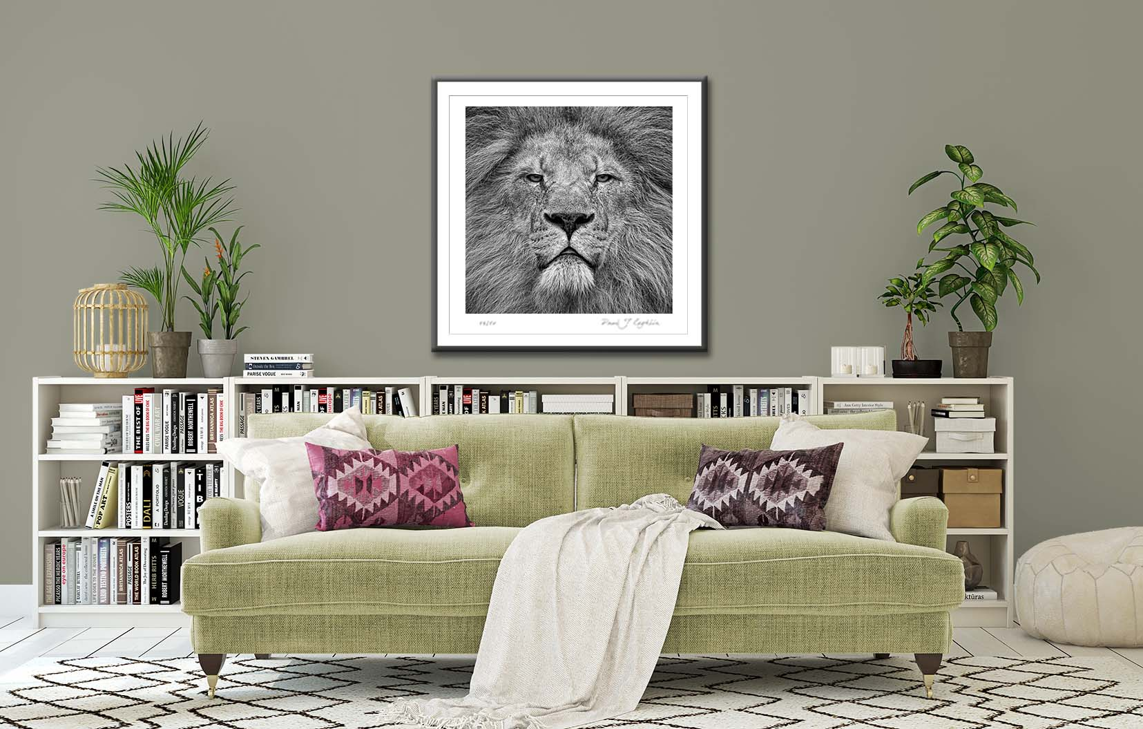 Lion photographic print by fine art photographer Paul Coghlin. In situ example.