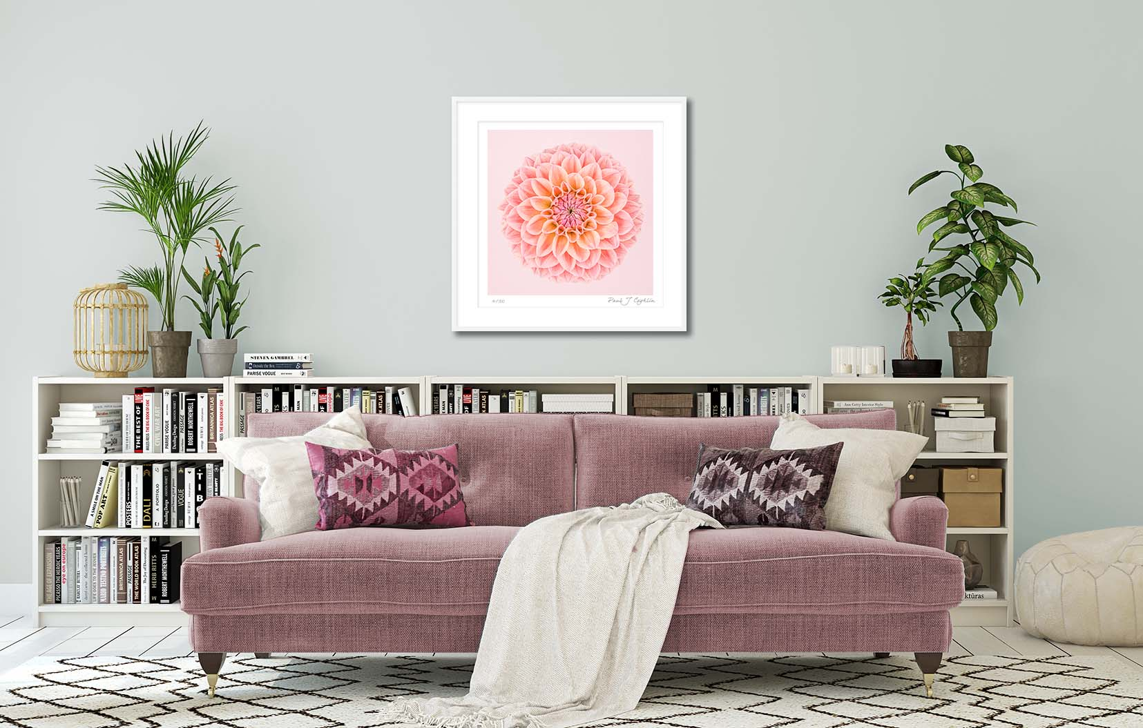 Pink Dahlia Circle I. Limited edition fine art print of a pink dahlia. Botanical prints and floral studies by fine art photographer Paul Coghlin.