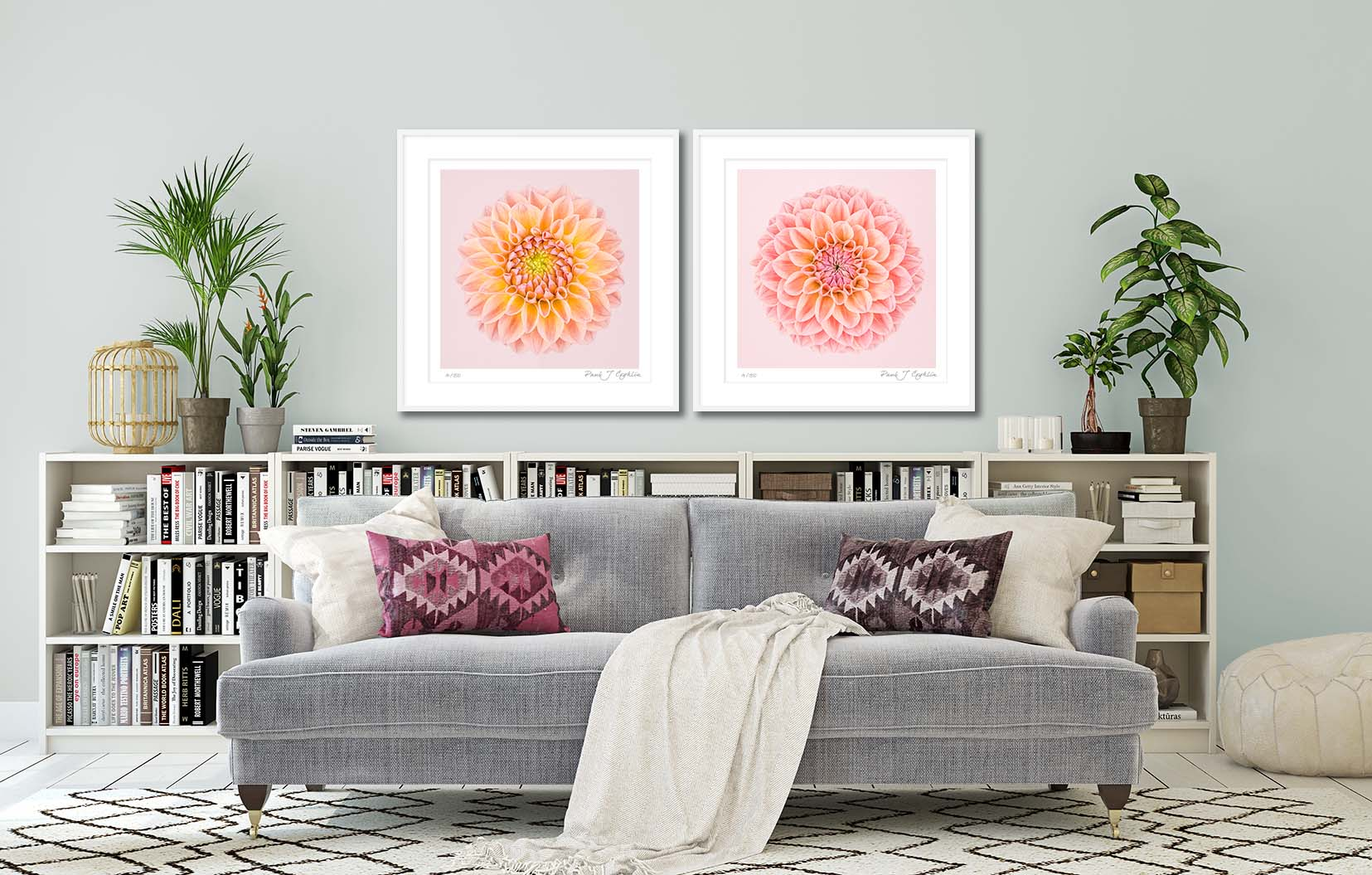 Pink and Yellow Dahlia Circle I. Limited edition fine art print of a pink and yellow dahlia. Botanical prints and floral studies by fine art photographer Paul Coghlin.