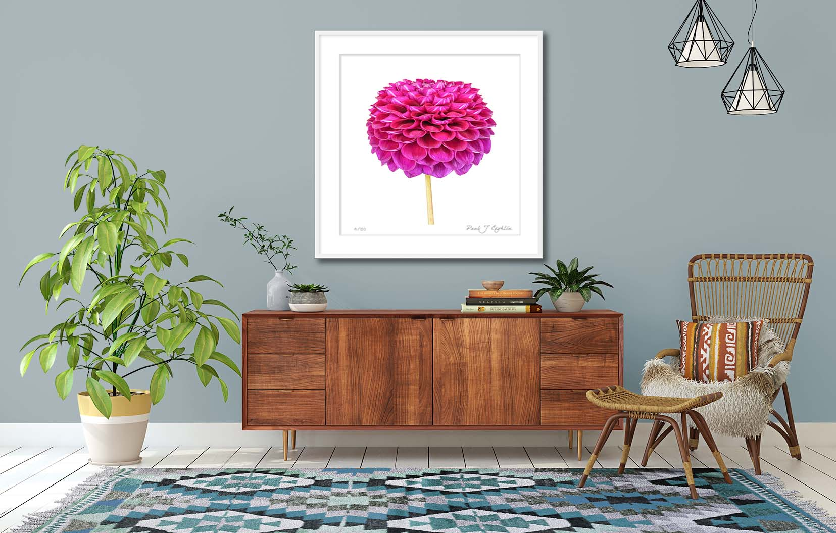Dahlia 'Downham Royal'. Colour limited edition print of a purple dahlia by fine art photographer Paul Coghlin FBIPP