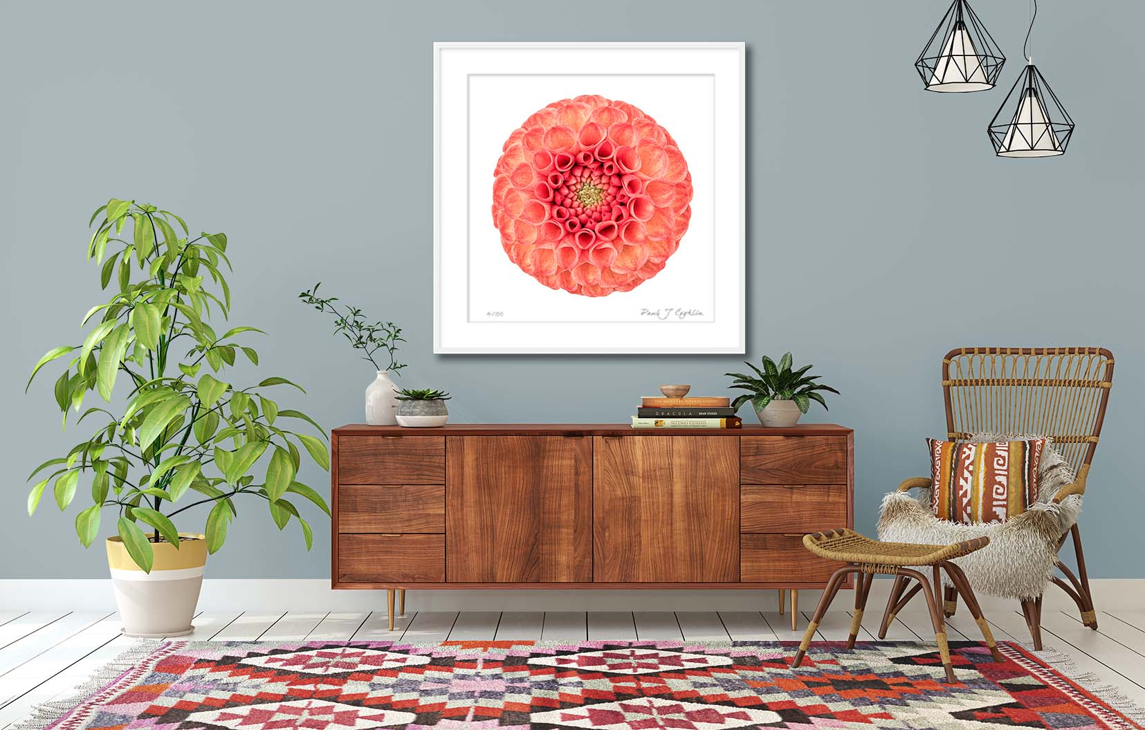 Dahlia 'Ginger Willo' II. Limited edition colour photographic print of an orange dahlia by fine art photographer Paul Coghlin FBIPP