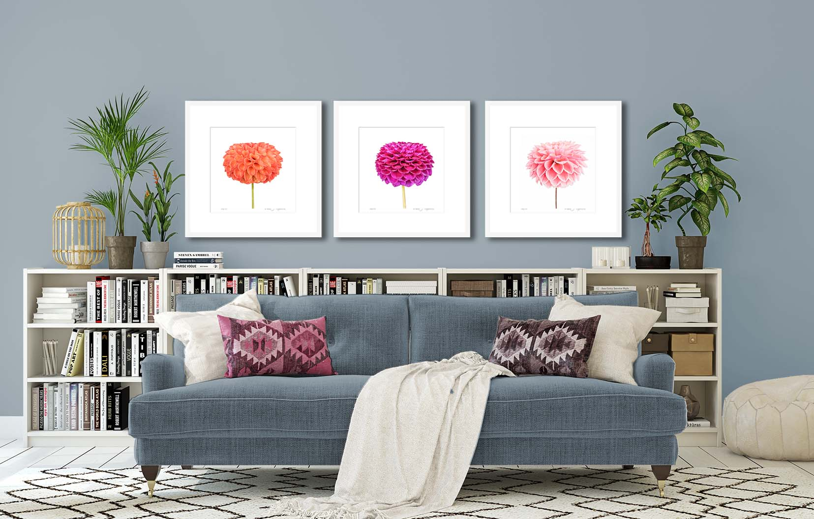 Dahlia 'Peach Cupid' II. Limited edition floral print of a dahlia by fine art photographer Paul Coghlin.
