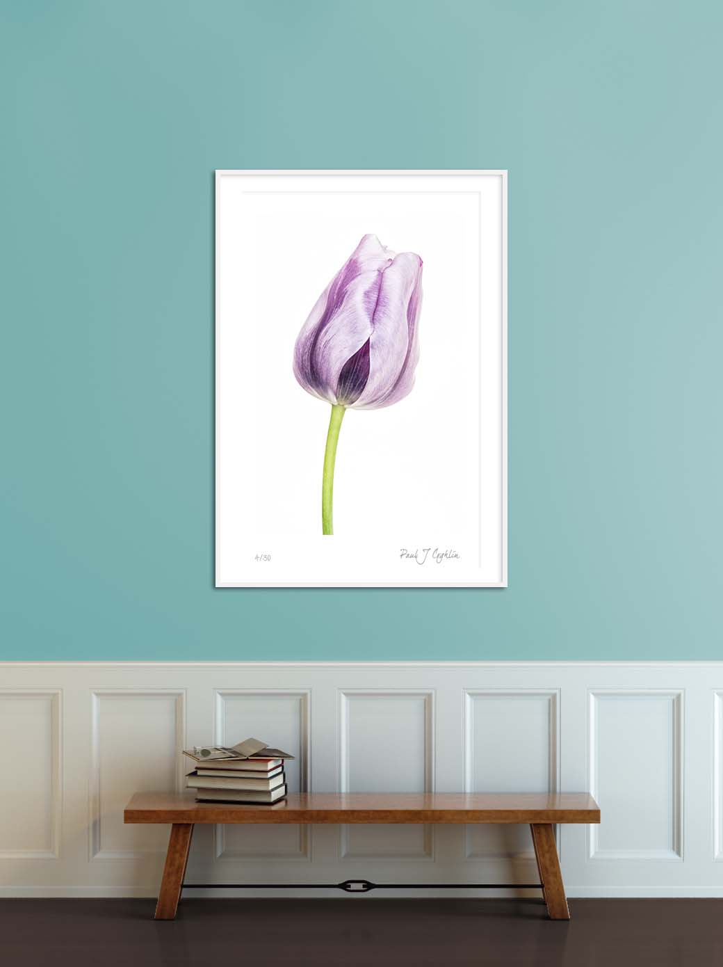 Blue Parrot Tulip V.Limited edition photographic print of a blue tulip by fine art photographer Paul Coghlin FBIPP.