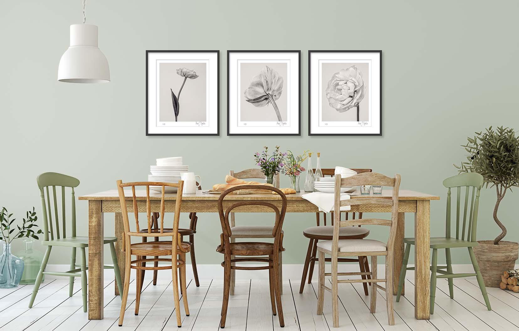 Three photographic prints of tulips: Tulipa 'Yellow Pompenette' I, II & III by award-winning fine art photographer Paul Coghlin FBIPP.