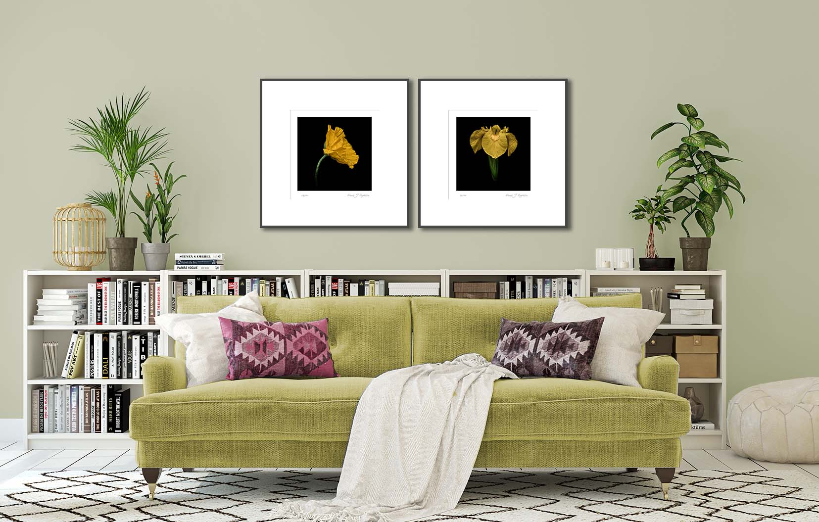 Yellow Field Poppy (colour) and Yellow Iris (colour). Two fine art prints of yellow flowers on a black background, framed and on the wall.