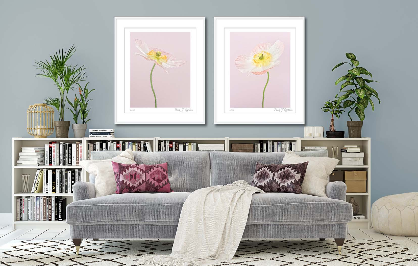 Pale Pink Icelandic Poppy. Limited edtition print of a pink poppy by fine art photographer Paul Coghlin FBIPP. Two photographic prints of pink poppies on the wall.