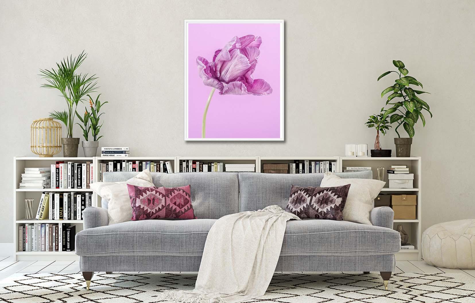 A fine art floral print of a purple tulip on a purple backgrounf. Limited edition prints by fine art photographer Paul Coghlin FBIPP.