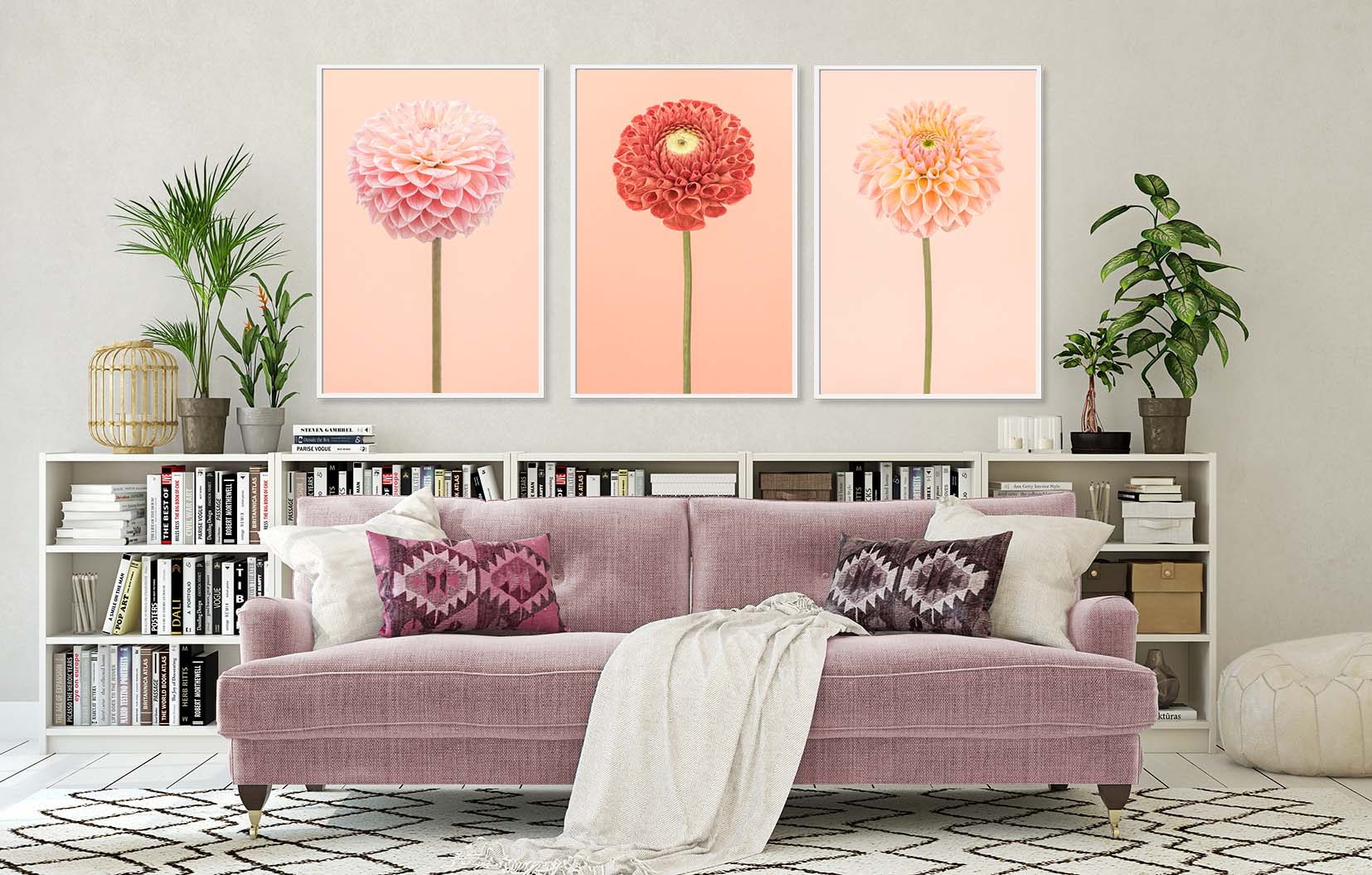 Three limited edition photographic prints of dahlias, framed and on the wall. Floral prints by award-winning photographer Paul Coghlin FBIPP.