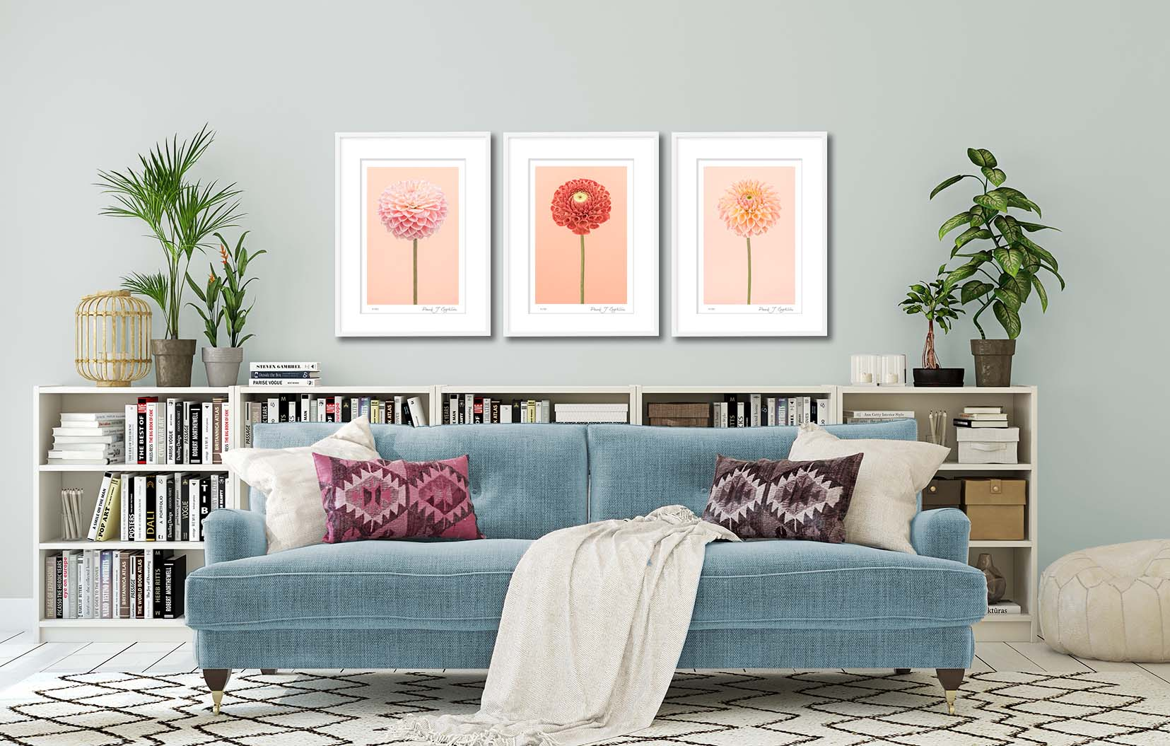 Three limited edition floral prints of dahlias. This photographic prints are part of a series of botanical studies by award-winning photographer Paul Coghlin FBIPP.