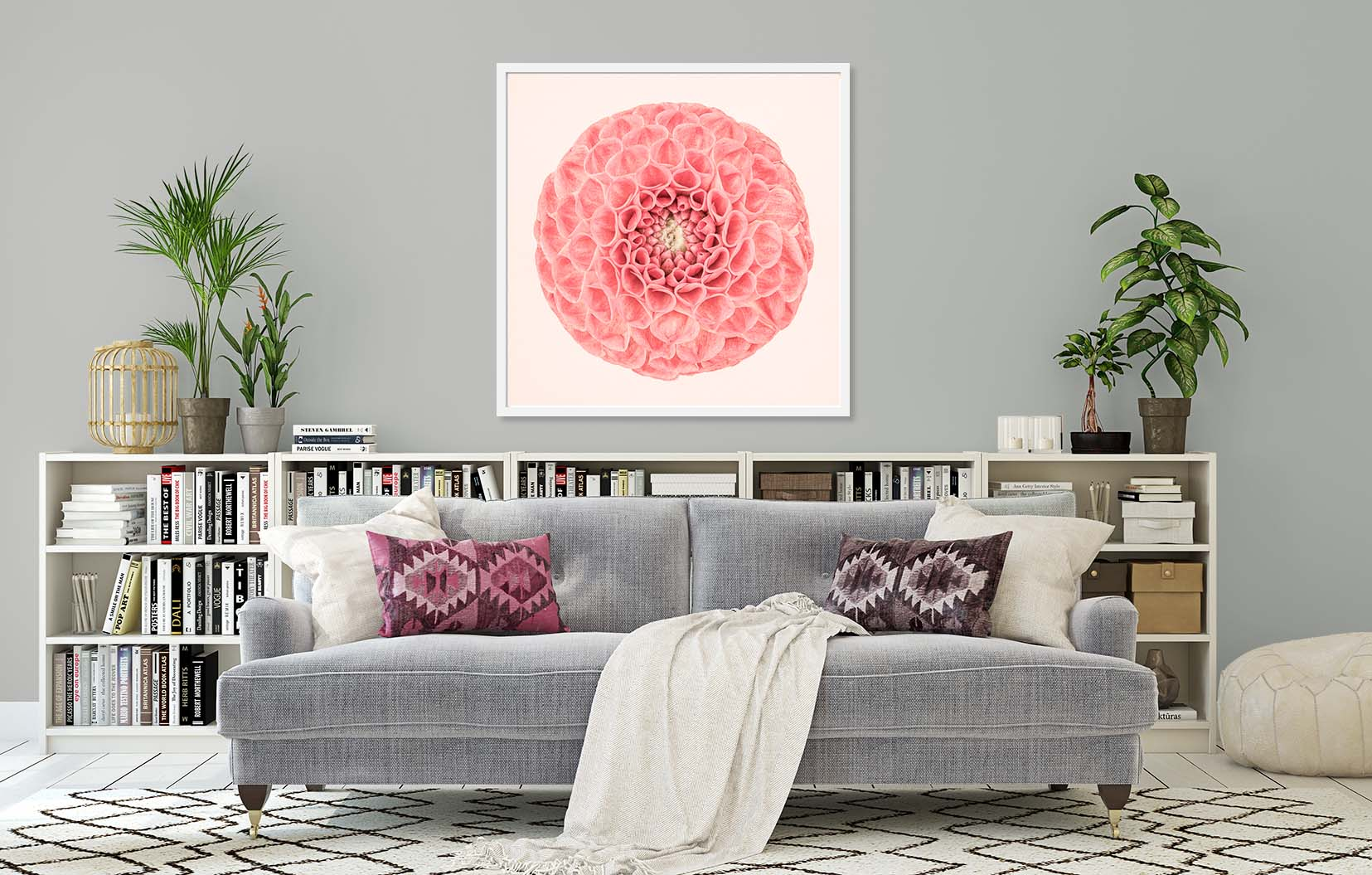 Pink Dahlia Circle II. Limited edition fine art print of a pink dahlia. Image shows a pink dahlia print and a pink and yellow dahlia print. Botanical prints and floral studies by fine art photographer Paul Coghlin.
