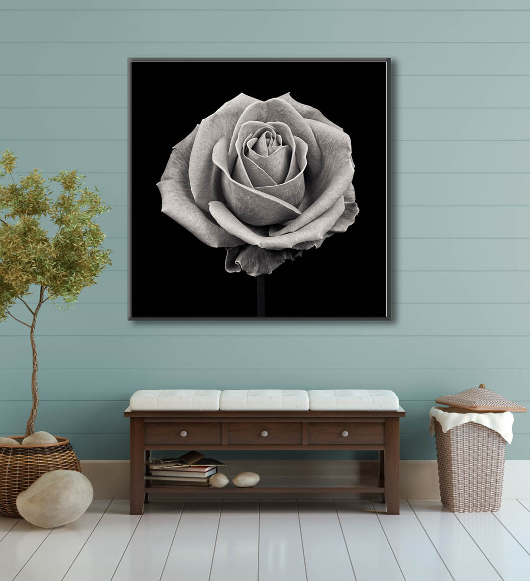 A black and white photographic print of a rose for sale. Fine art floral prints by Paul Coghlin FBIPP