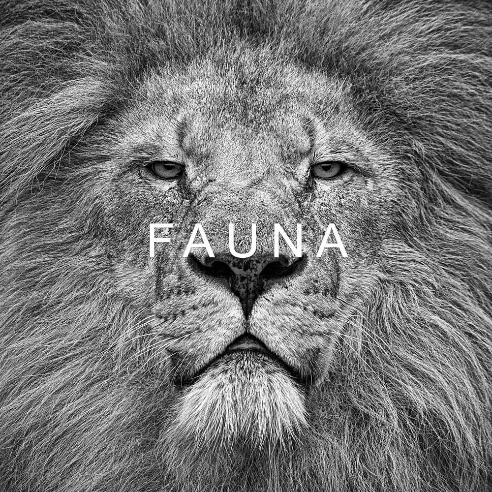 FAUNA - black and white prints of wild animals by fine art photographer Paul Coghlin