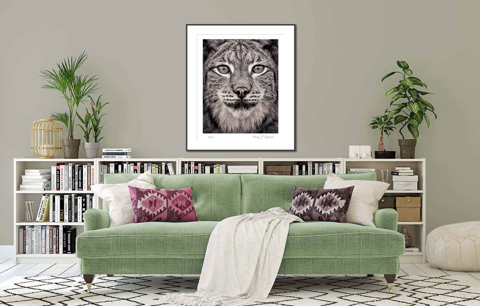 Portrait of a Eurasian Lynx from the Fading From View series. Big cat and animal prints by fine art photographer Paul Coghlin. Limited edition photographic prints