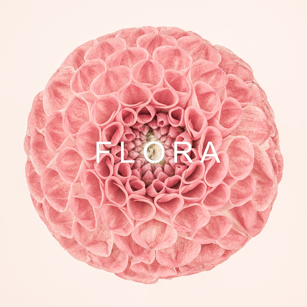 FLORA - limited edition botanic studies by fine art photographer Paul Coghlin