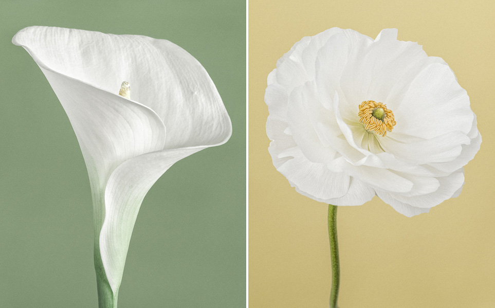 Colour floral series of fine art limited edition prints by Paul Coghlin FBIPP