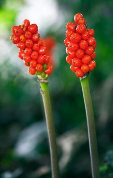 331_wildflower-myths-amp-magic.jpg