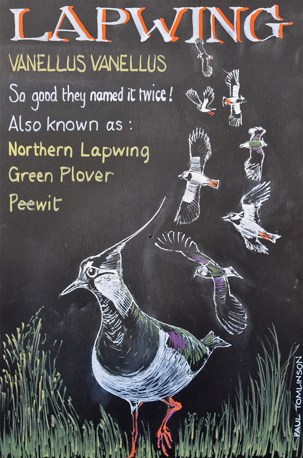 Lapwing - RSPB sign board