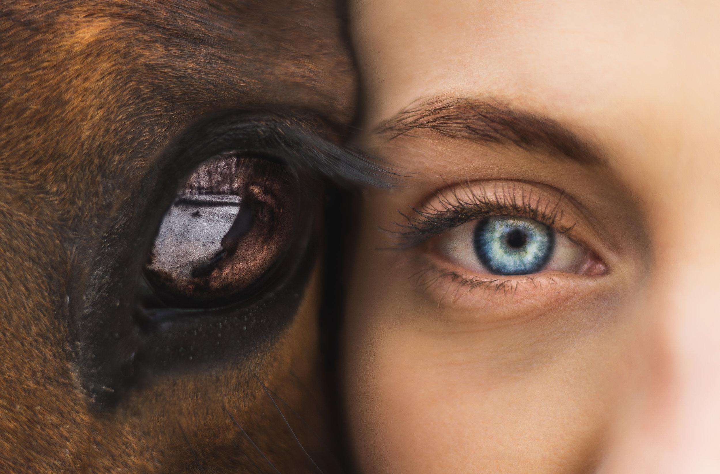 Equitation-regard-du-cheval.jpg