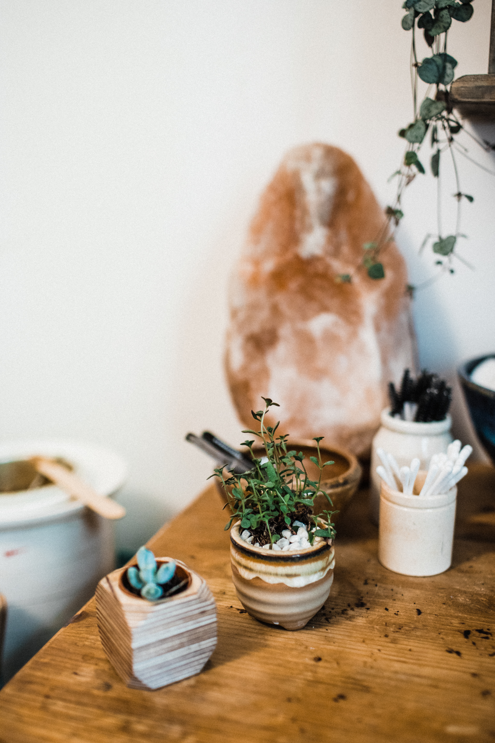 Succulents and houseplants
