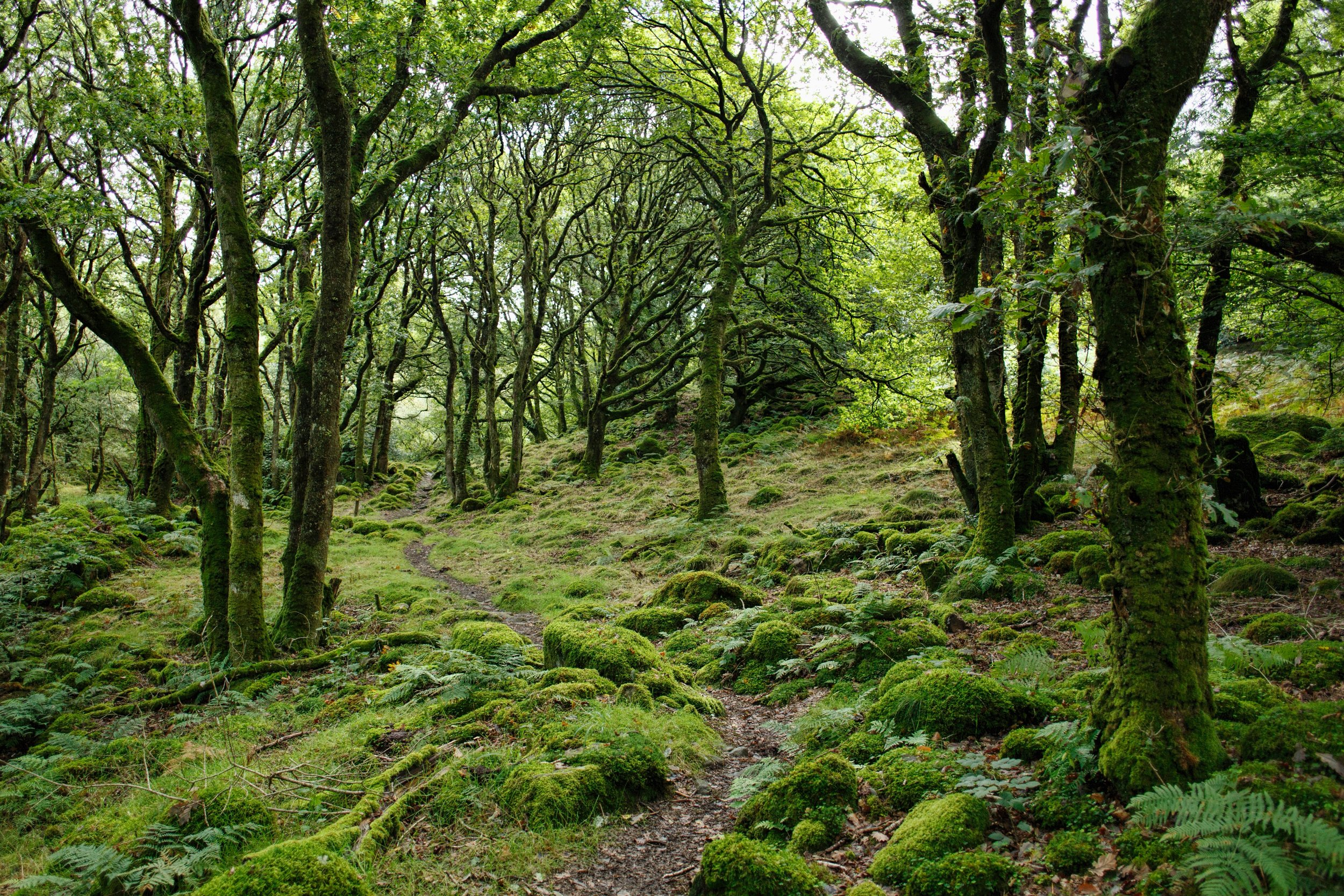 About - Find out more about the art of forest therapy walks and how they can benefit you.
