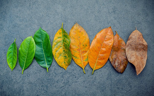 Transitioning-leaves.jpg