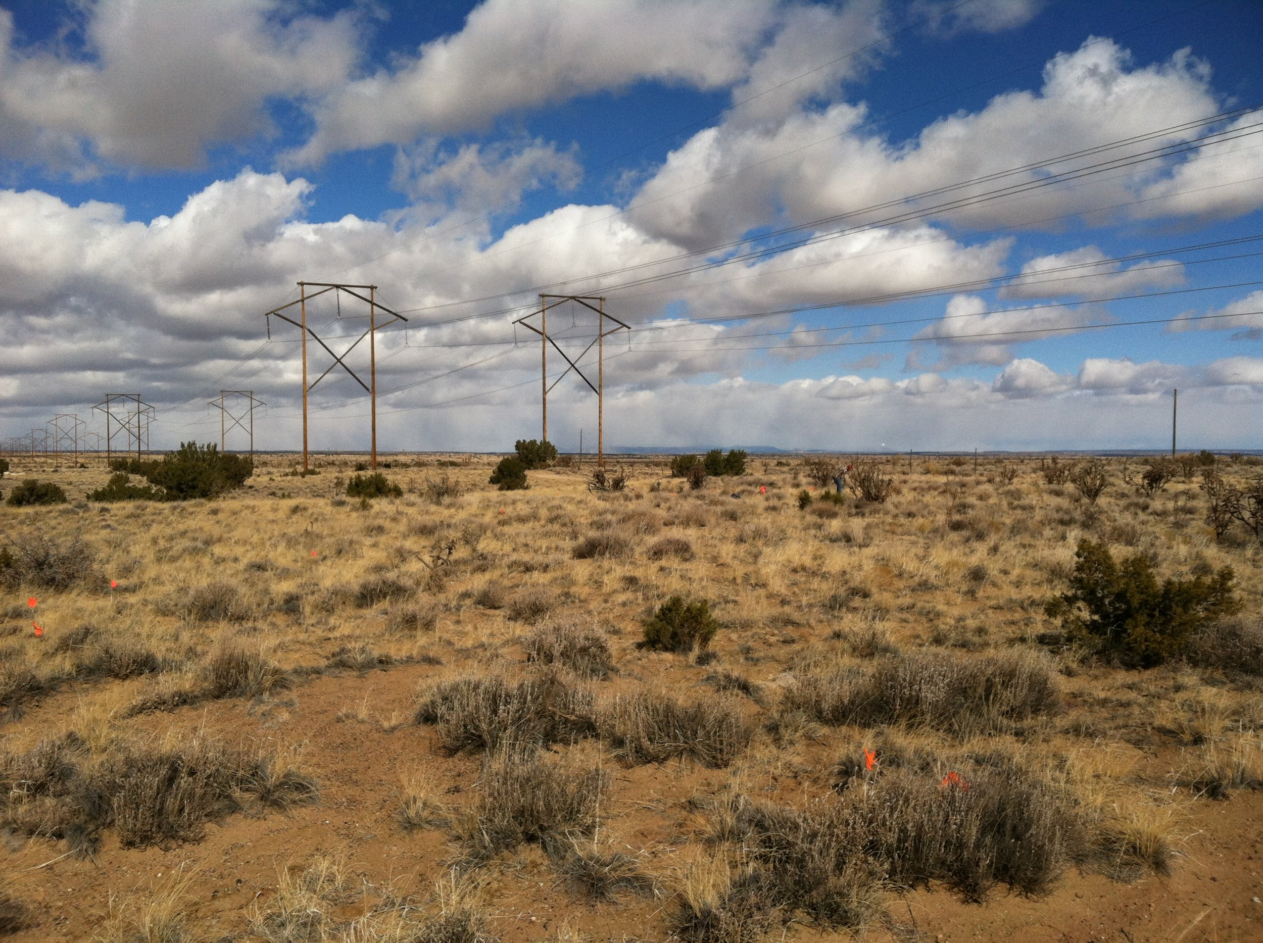 Powerline Study in central New Mexico.