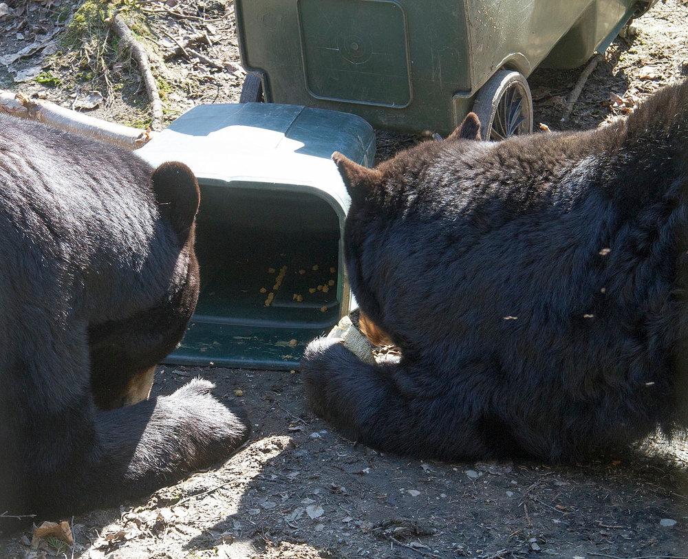 bear aware at the zoo.jpg