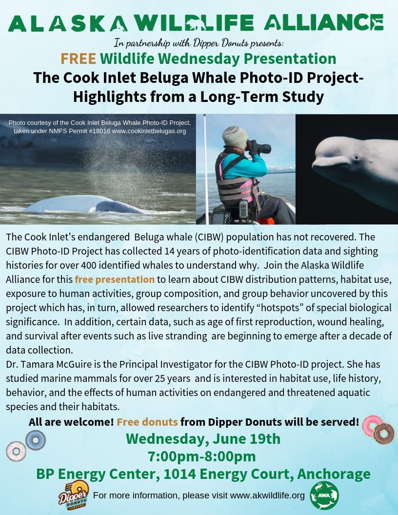 tamara mcguire alaska wildlife alliance cook inlet beluga whale