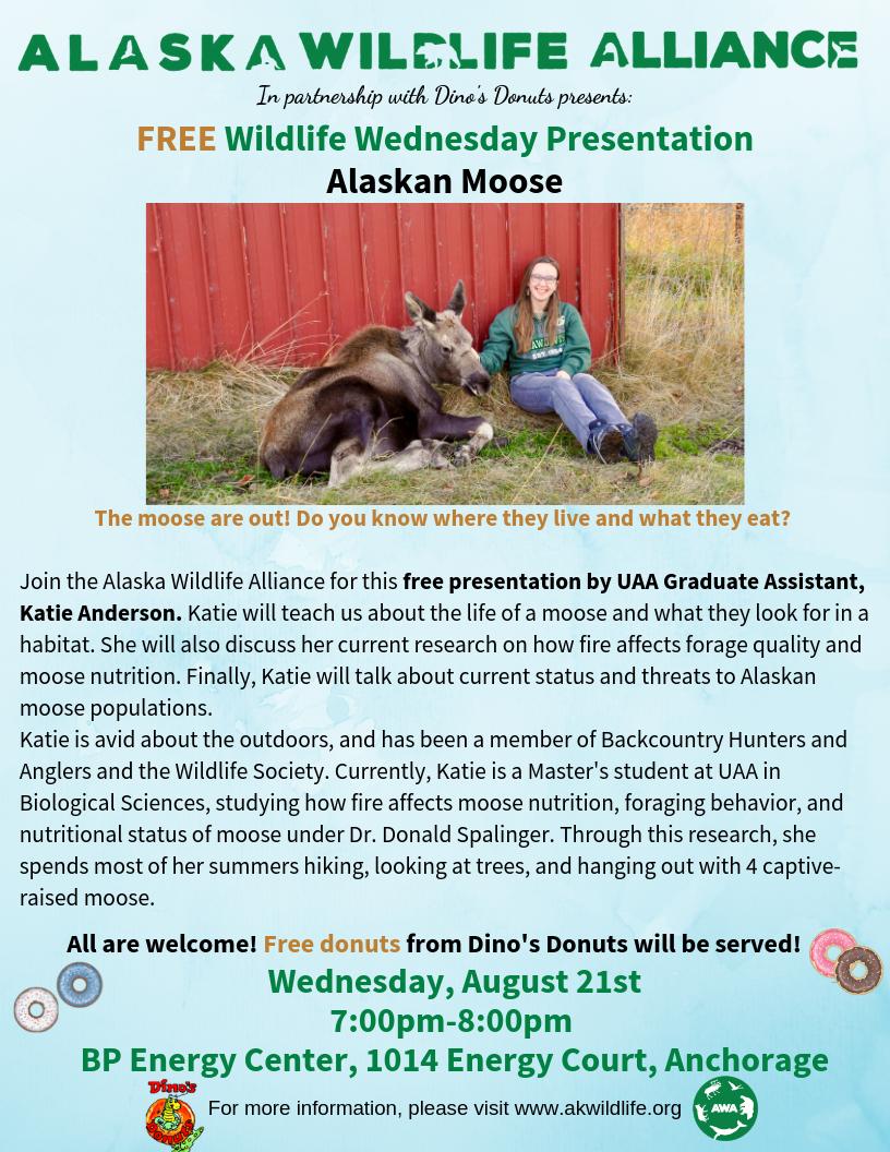 katie anderson wildlife wednesday alaskan moose