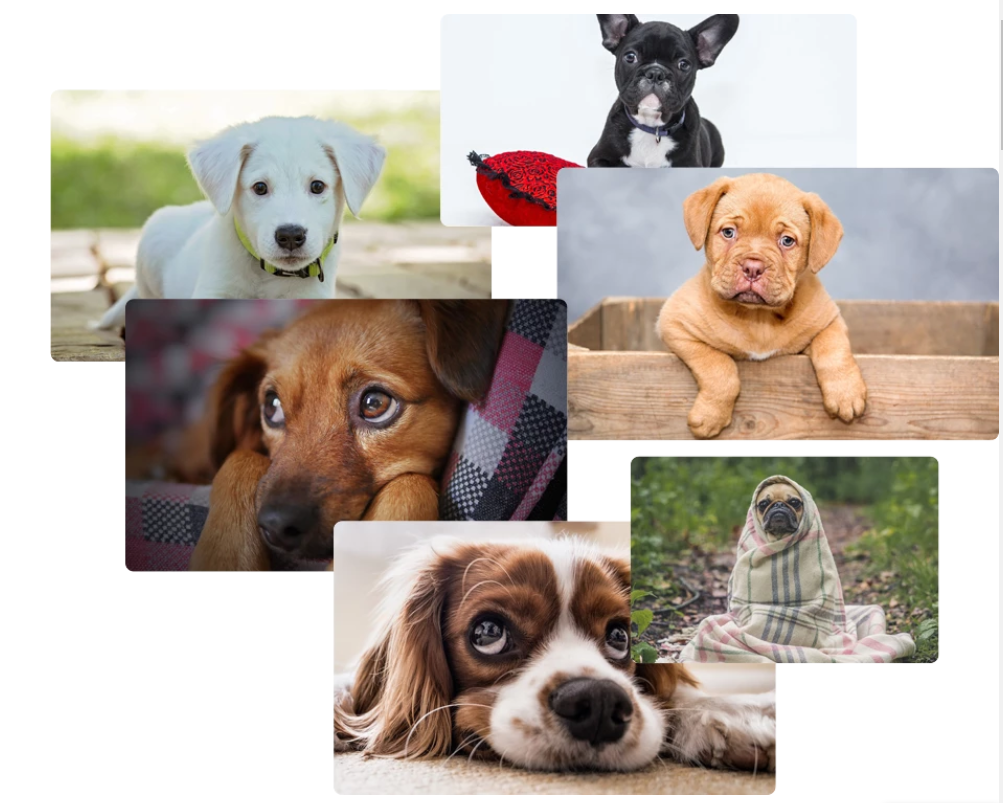 gold zoo dog photos.PNG