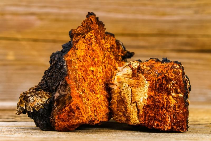 chaga-fungus-pieces.jpg