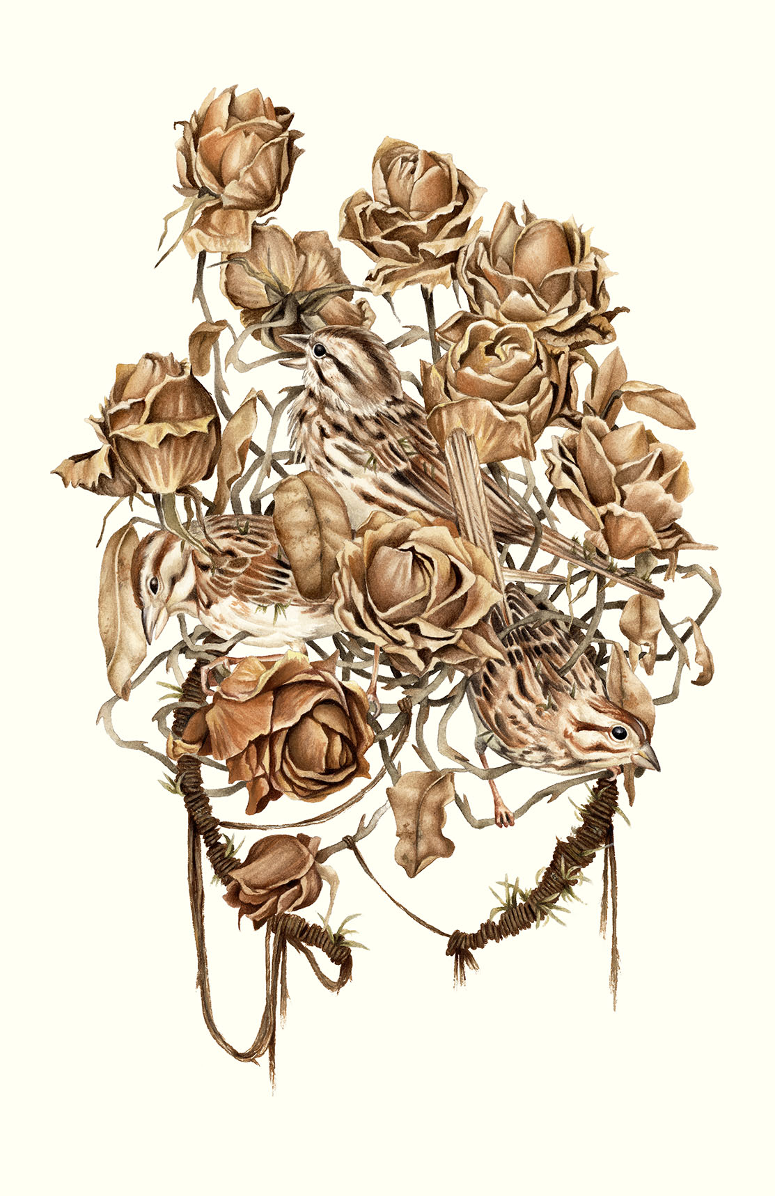 Of Roses