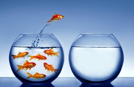 adapt and thrive.jpg