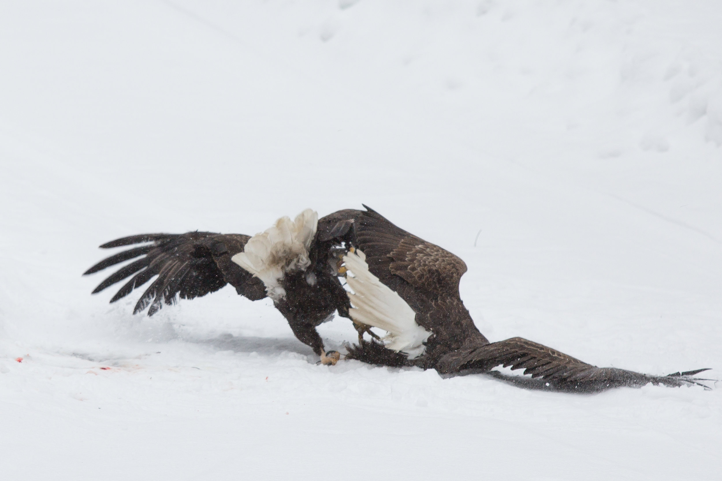 EaglesIG (5 of 9).jpg