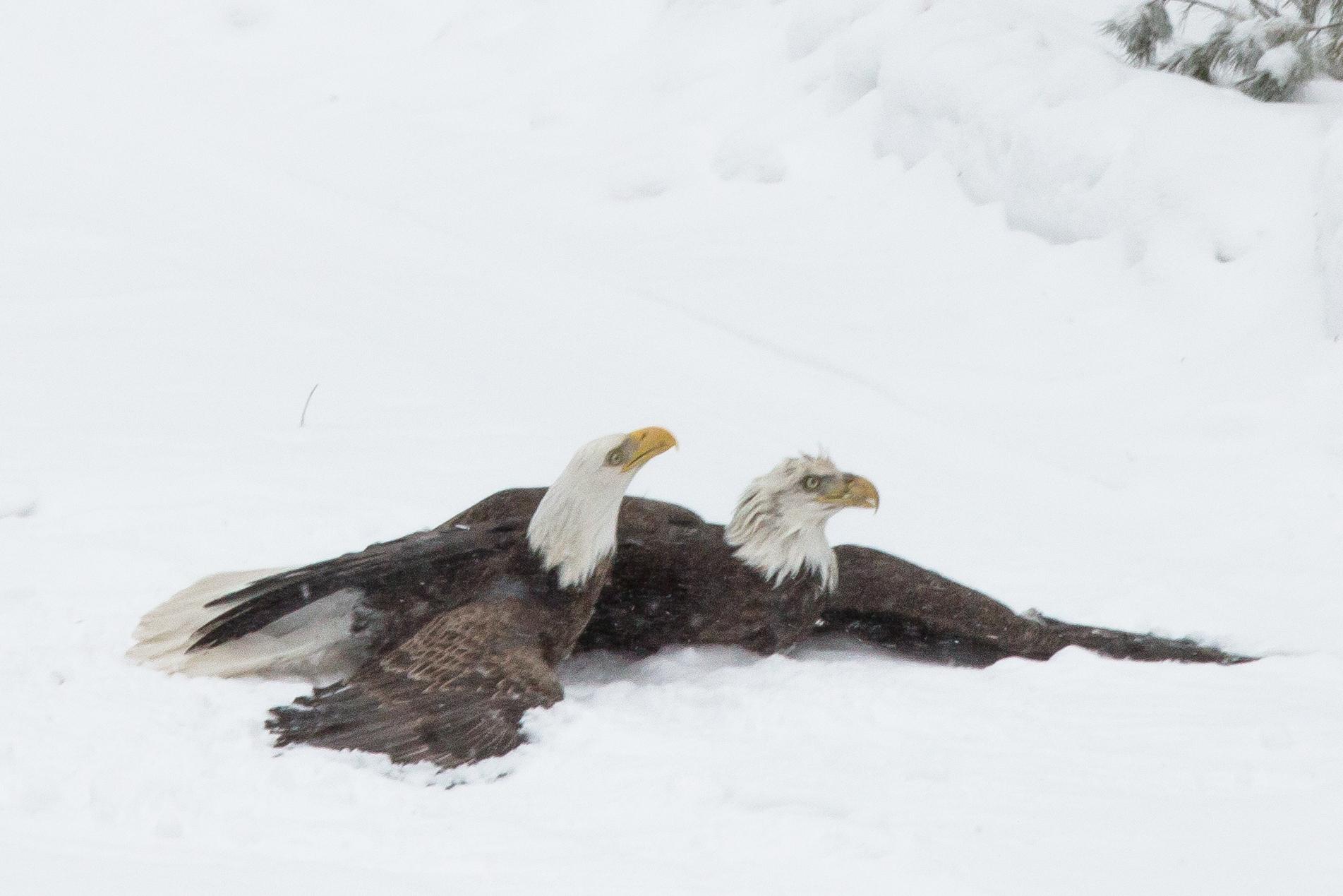 EaglesIG (9 of 9).jpg