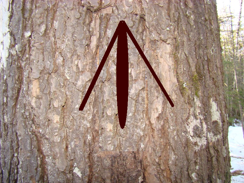 """King's Broad Arrow  """"So what was known as the Act of 1729 was the cause of future trouble. That act said that in any township now laid out or to be laid out in Maine, the Surveyor of Pines and Timber should mark as property of the Crown such pines of more than 24 inch diameter as he should deem fit for Naval masts. To the Maine colonists for whom lumbering was a major, and in many instances, the only cash occupation, the great pines had many other uses. Every time a Maine settler went into the woods and saw every big pine marked with the King's Broad Arrow, his resentment increased. That resentment, added to British treatment of Boston and the imposition of various taxes, brought on the Revolution.""""   https://maineanencyclopedia.com/lumber-industry/"""