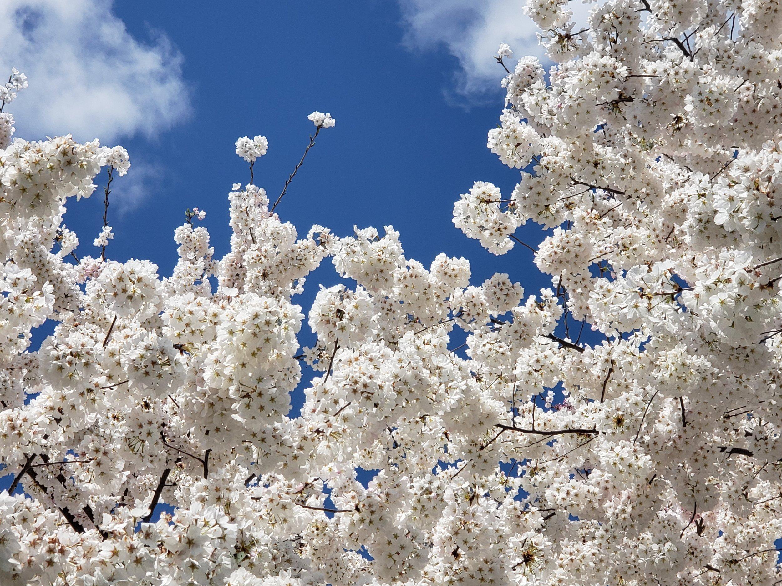 Blossoming Sky - Rachel Wielgopolski