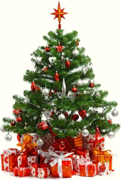 beautiful_christmas_tree_6_hd_picture_170696.jpg