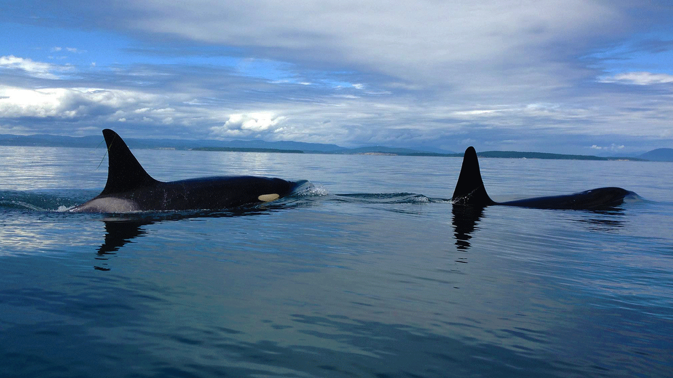 2-Day Orca Quest Tour -