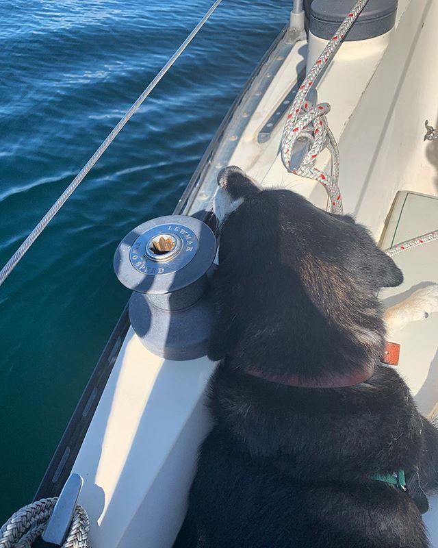 Sleepy pup. Finally liking boats again. 💕