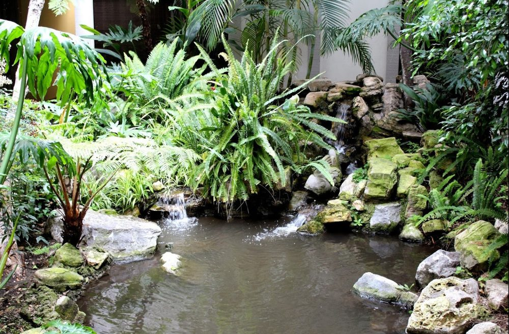 integrated physicians medical group chiropractor office garden pond peace zen.jpg