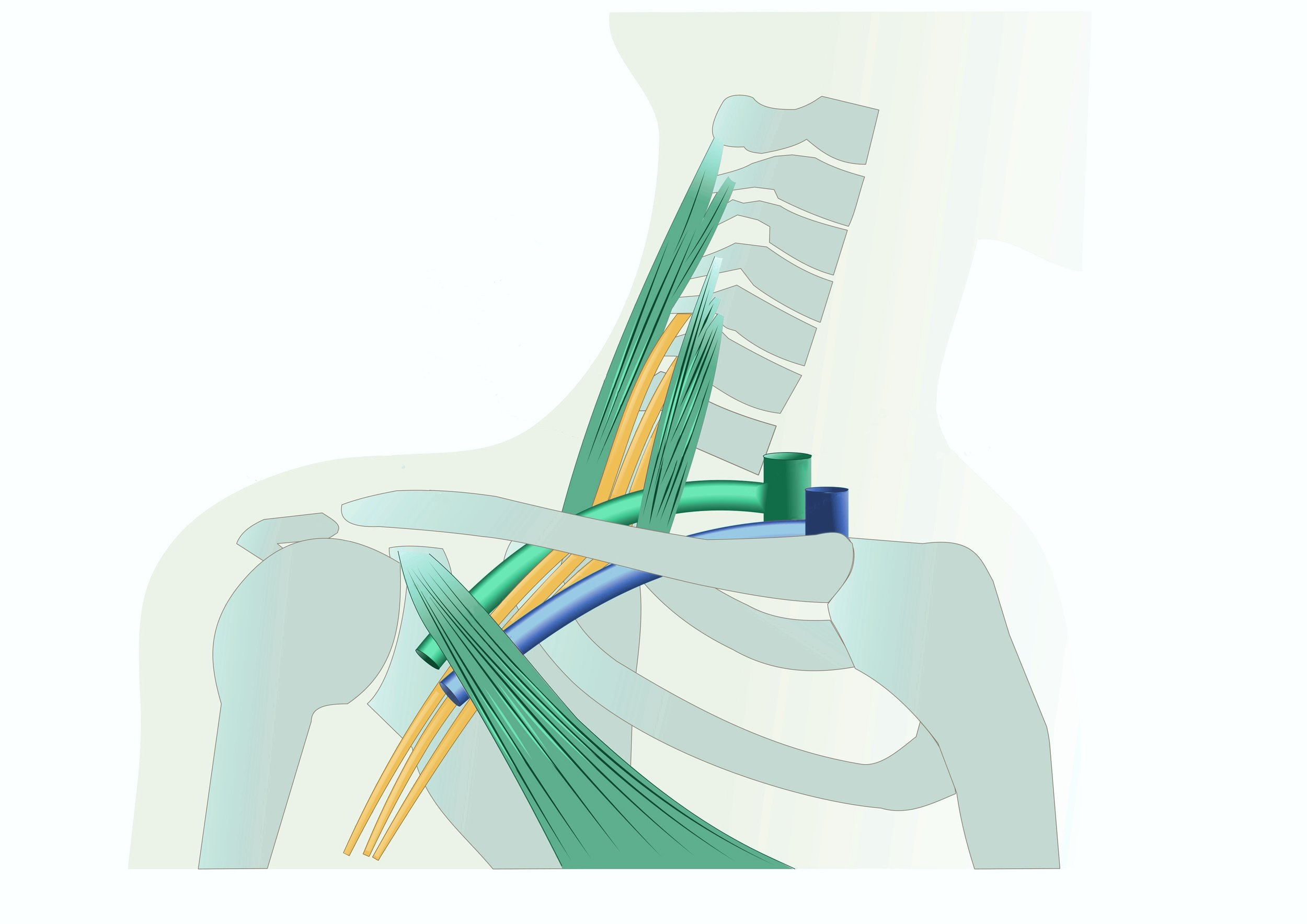 thoratic-outlet-syndrome_integrated-physicians-medical-group_the-integrated-brain-and-spine-center-for-functional-neurology-and-medicine.jpg