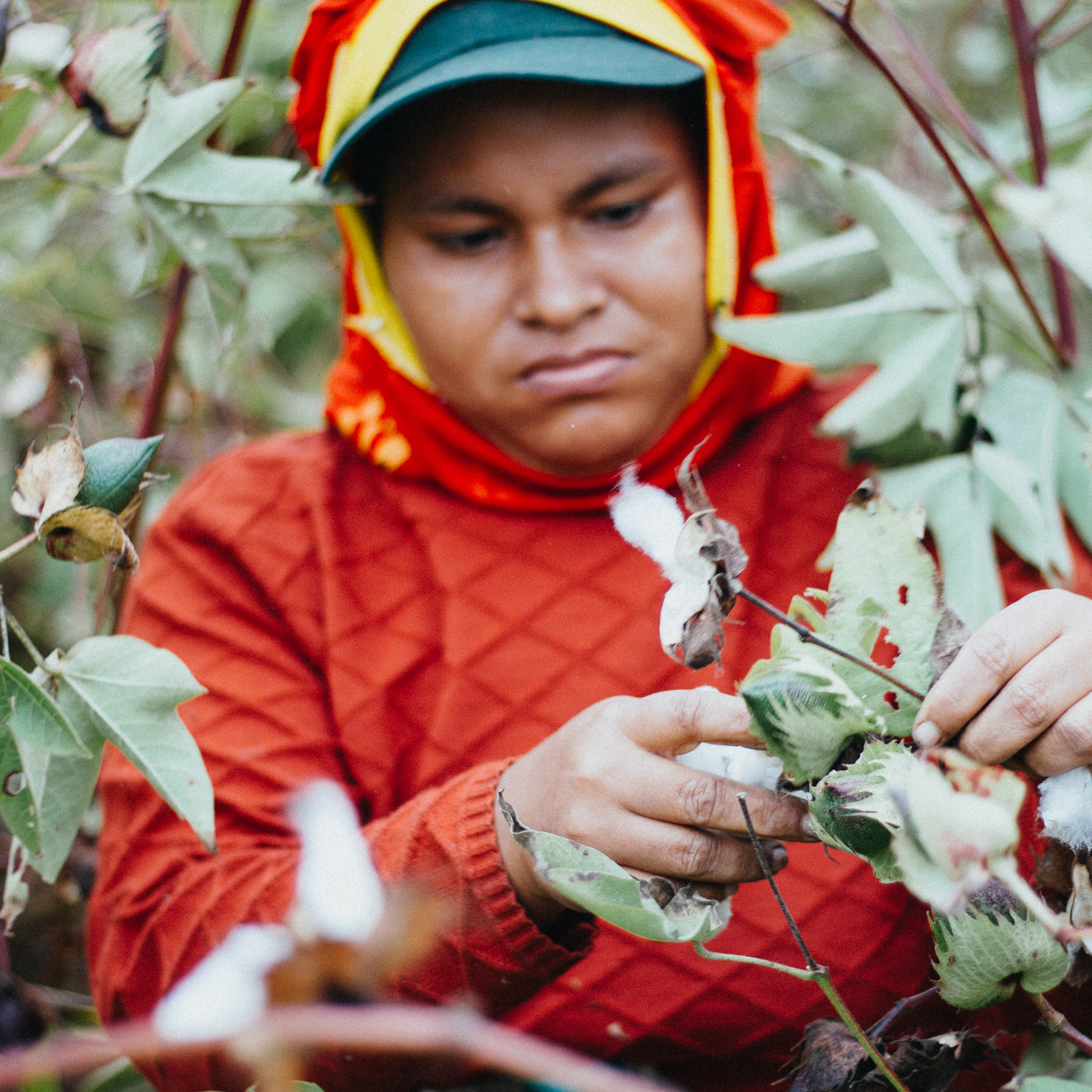 Organic Pima Cotton - Our cotton is hand picked in the mountainous regions of Peru. Peruvian Pima Cotton is considered the finest in the world. It is truly the gold standard for long strand cotton. Read more about why we chose organic pima cotton from Peru in our blog. CLICK HERE