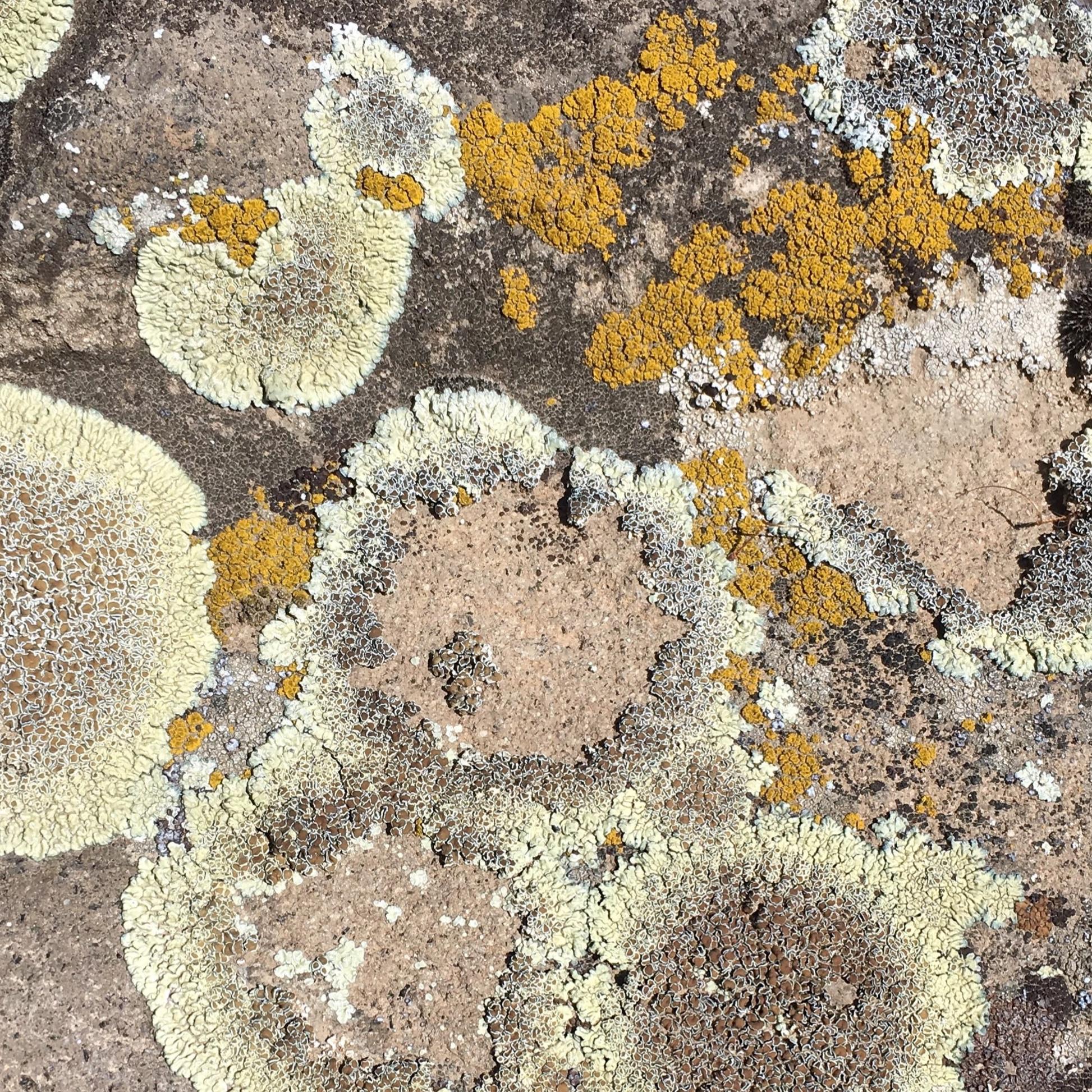 innerspacism-inspiration-lichen
