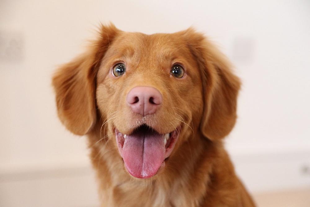 positive reinforcement dog training in anacortes, WA