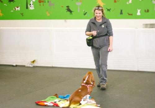 private dog training in anacortes, WA