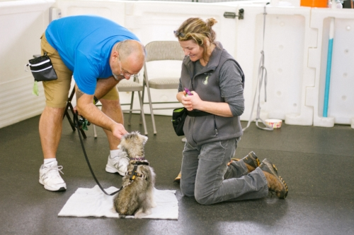dog training classes anacortes
