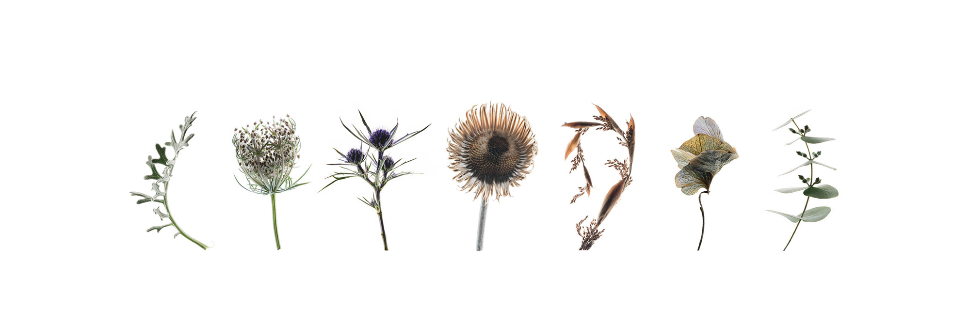 Silver-Botanical-line-up.jpg